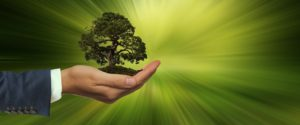 UK'S most well-known leading sustainable businesses tree in hand